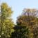 fall_tree_banner